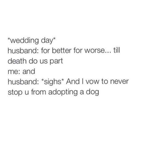 Vows for any dog lover With this ring I thee wed Pinterest