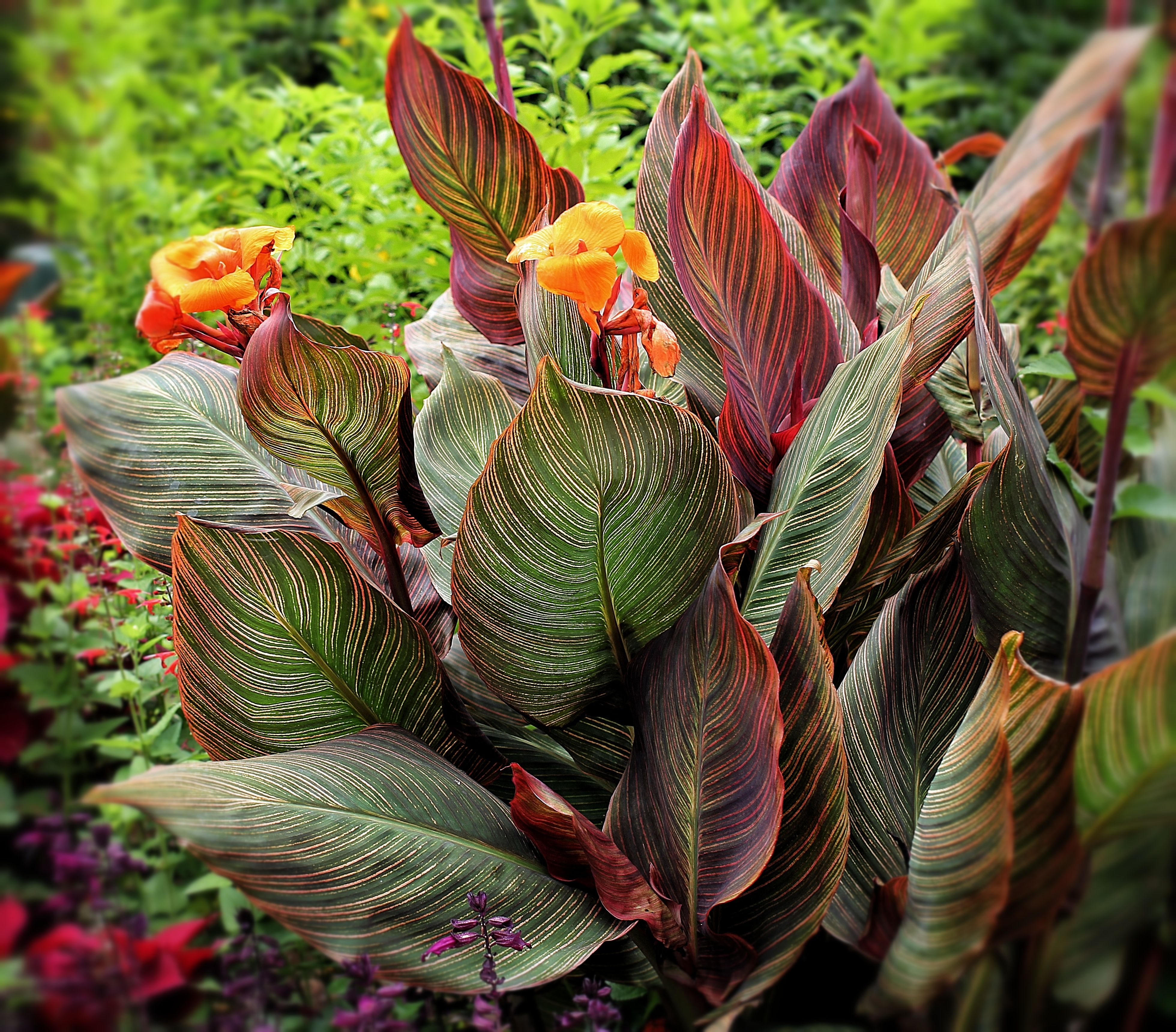 Lewis Ginter Botanical Garden. Richmond, VA. Botanical