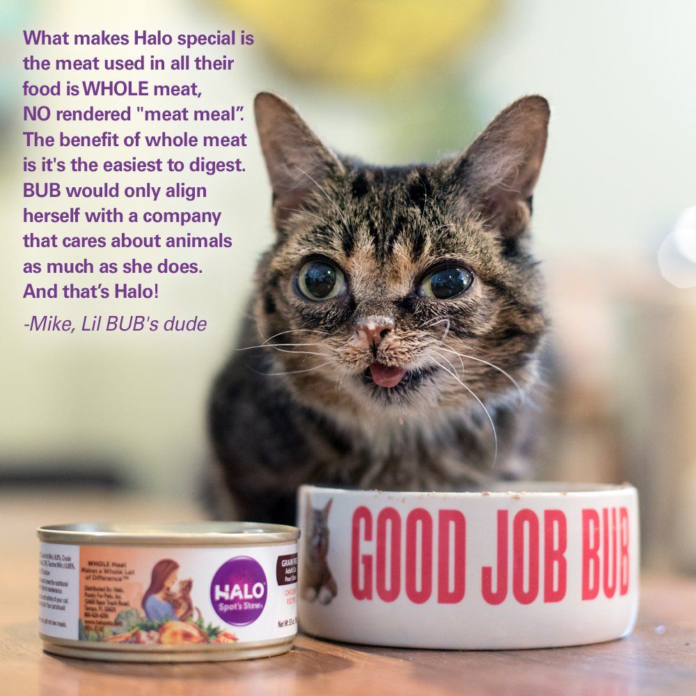 Halo Holistic Dry Cat Food Wild Salmon and Whitefish