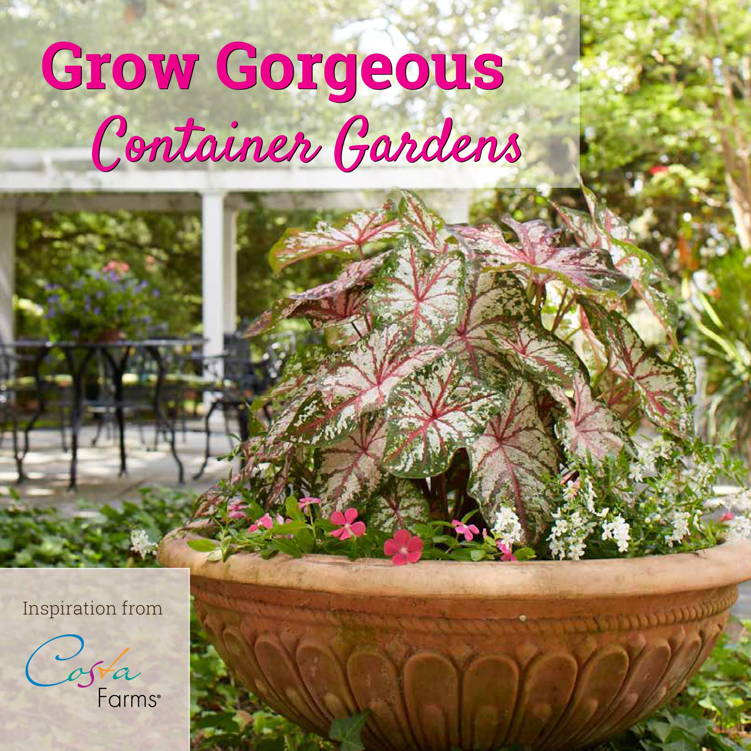 Get Ideas And Inspiration For Creating Container Gardens