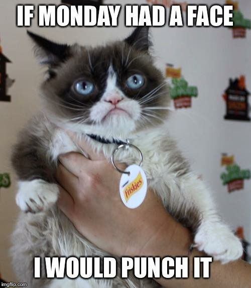 If Monday Had A Face I Would Punch It | Funny grumpy cat ...