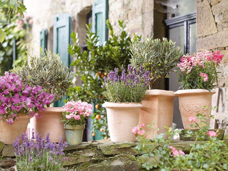 Holt Euch Die Toskana Nach Hause Mit Terrakottatopfen Lavendel Und Olivenbaumchen Fur Euren Garten Schoner Blumengarten Pflanzen Kubelpflanzen