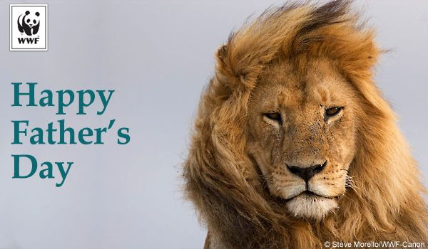 Fathers day lion ecard leos for cecil always remember pinterest fathers day lion ecard sciox Gallery