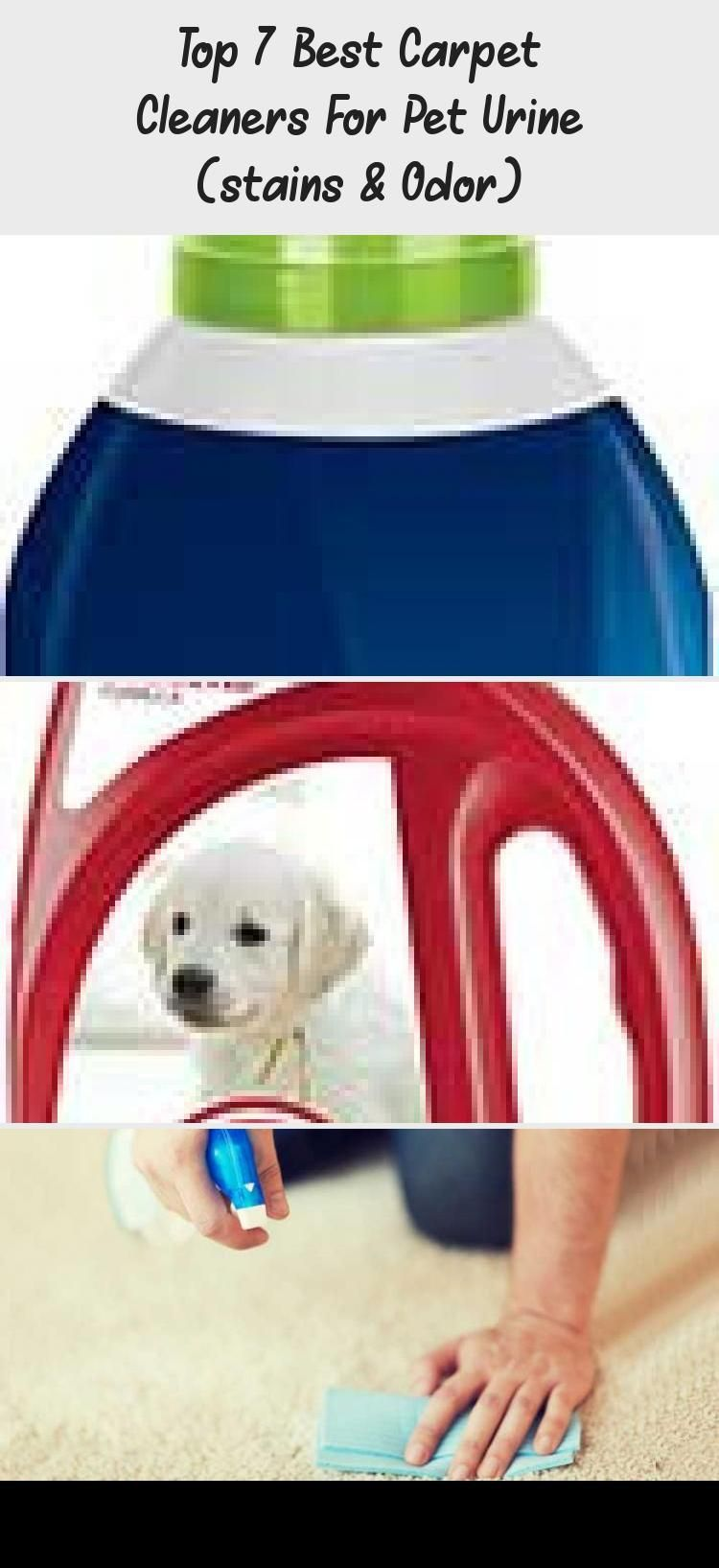 Top 7 Der Besten Teppichreiniger Fur Haustierurin Flecken Geruch Hundeflecken Teppichreiniger In 2020 Pet Urine Carpet Cleaners Urine Stains