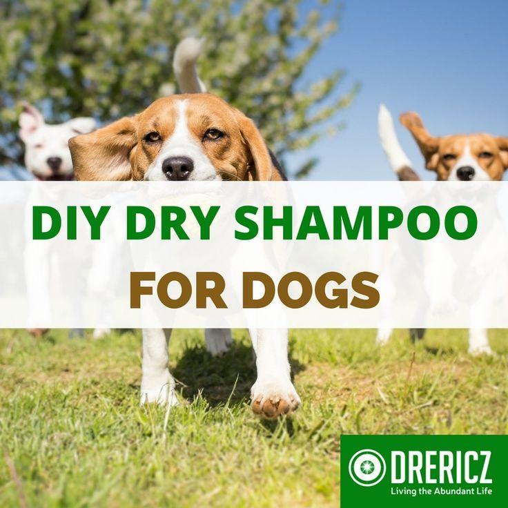Diy dry shampoo for dogs recipe diy dog shampoo dry