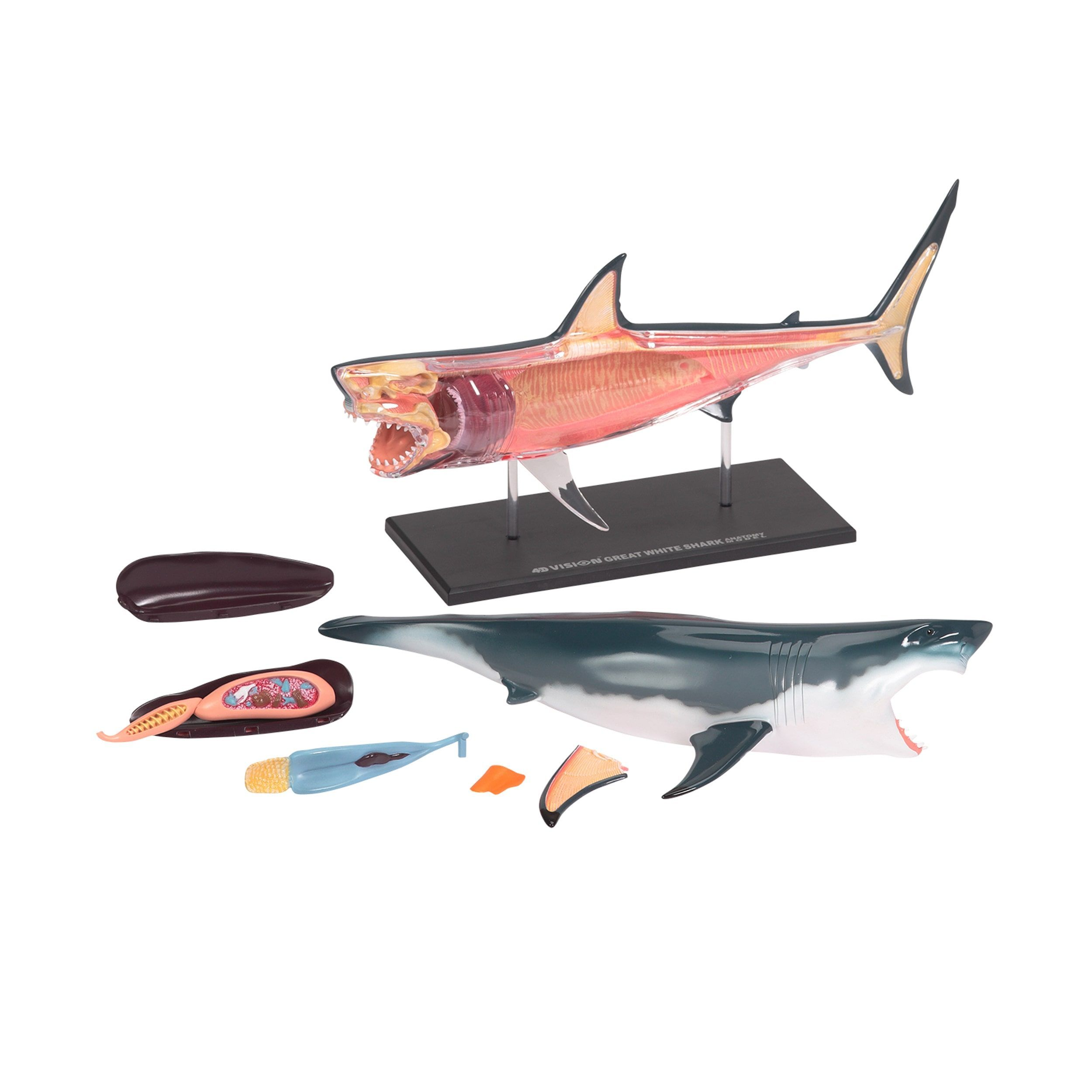 Warm Fuzzy Toys Shark Anatomy Model | Products | Pinterest | Anatomy ...