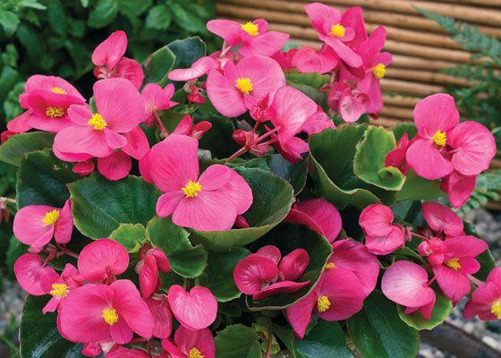 Pin On Gardening Fruits Vegies