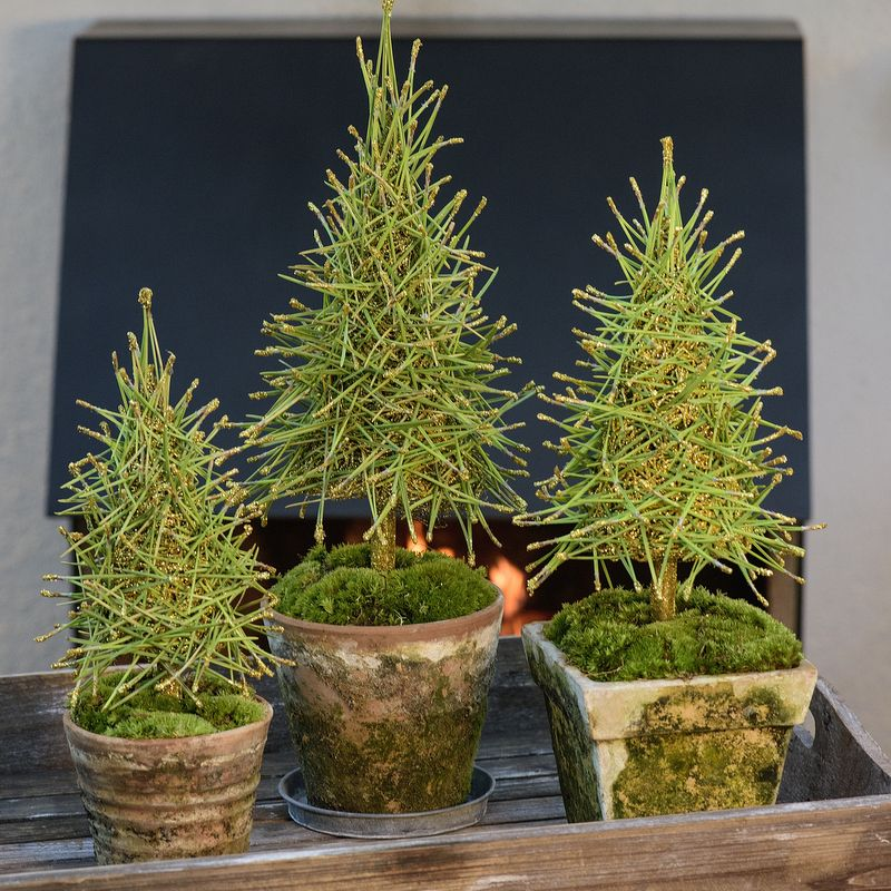 Christmas Tree Needles: Pine Needles And Moss...how Lovely....