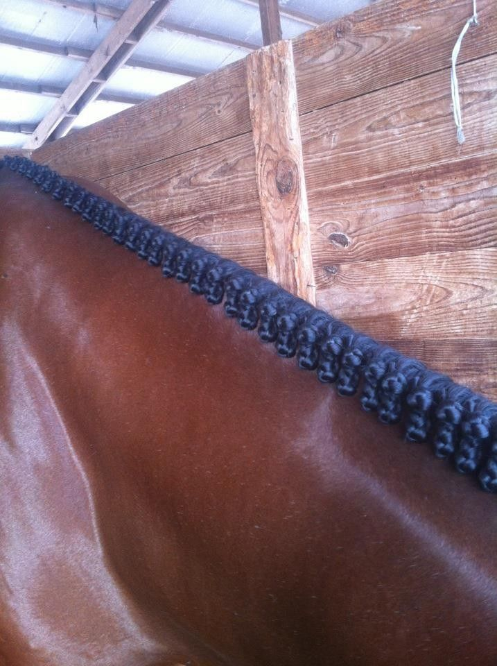Flat hunter braids, I love the look of a lot of tiny, perfectly spaced, flat hunter braids....but it does take forever and I rarely get to practice.