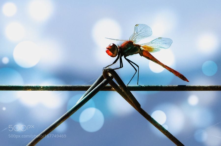 Cerca del cielo (Near the sky) by -LL-Poems #nature #photooftheday #amazing #picoftheday