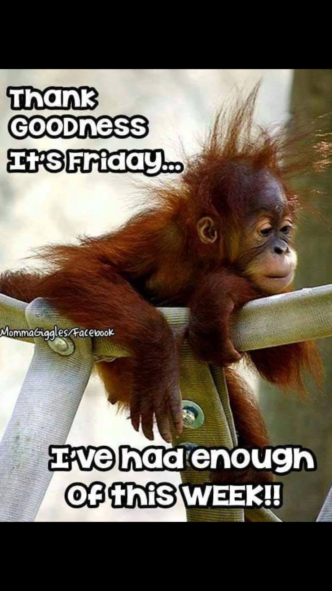 Me too buddy, me too 👋 | Friday humor, Funny good morning ...
