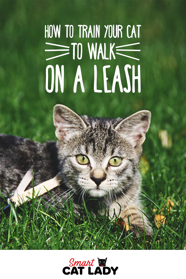 How To Train Your Cat To Walk On A Leash Cat Care Cat Training Cat Leash