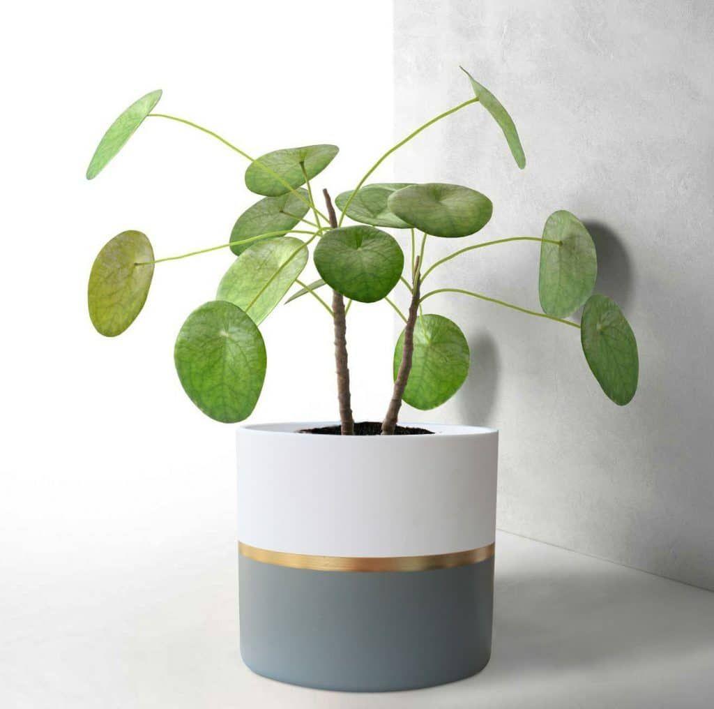 15 Modern Indoor Planters For Every Room In Your Home Smart Garden Guide Indoor Plant Pots Indoor Planters Plant Pot Diy
