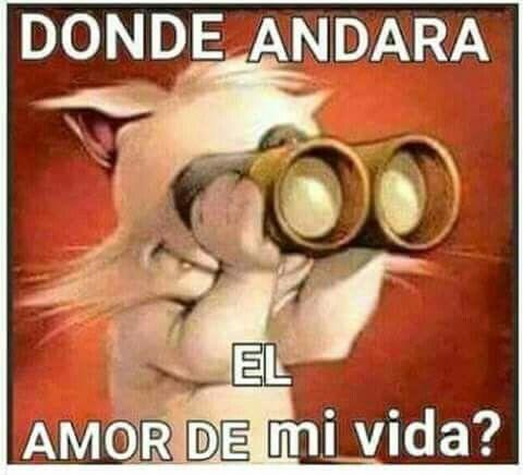 Donde Andara El Amor De Mi Vida Mensajes Tiernos De Amor Amor Y Sensualidad Frases Para Mi Amor