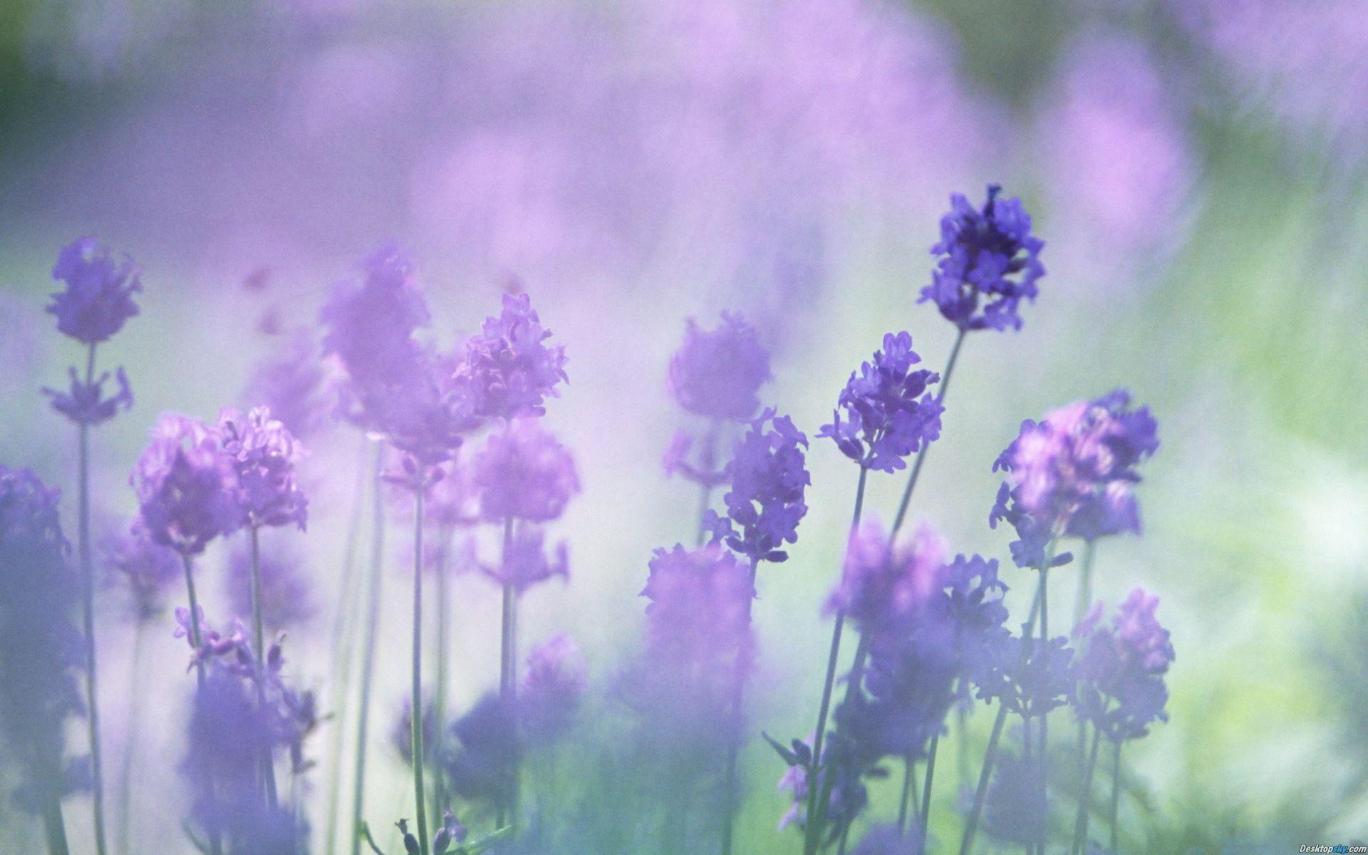 19 Hình ảnh Hoa Màu Tím đẹp Làm Hình Nền đẹp Hình ảnh Màu