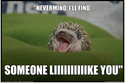 Image result for hedgehogs at home meme