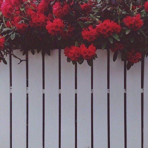 Background Flowers Grunge Iphone Wallpaper Love Maroon