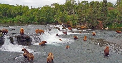 Katmai National Park is on mainland Alaska, just opposite Kodiak Island. It's known for its brown bear population, particularly this famous spot where they converge to fish.