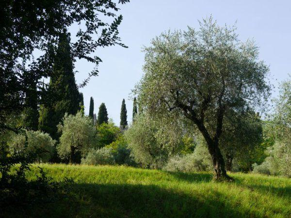 Große Gärten gestalten Mediterrane Gärten Pinterest - garten gestalten mediterran