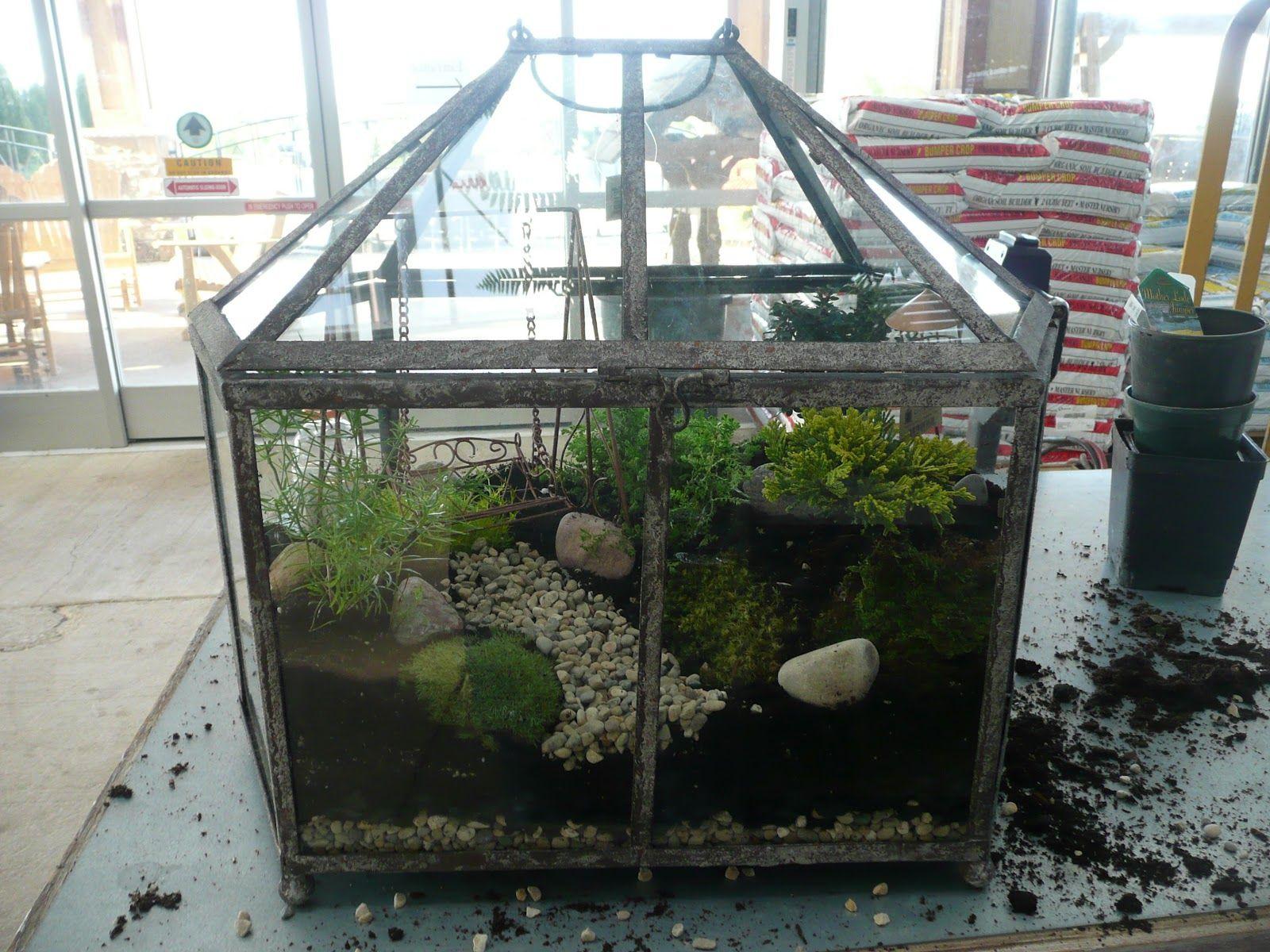 lets grow fairy garden terrarium - Fairy Garden Terrarium