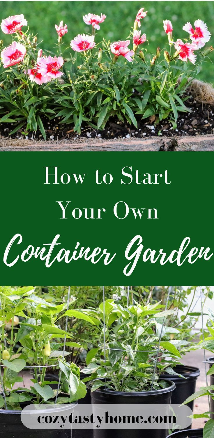 Want to start a garden, but don't have the space or the time? You can still plant beautiful flowers, delicious vegetables, and herbs in a container garden! This is an easy guide to starting your own container garden - whether it's on a backyard patio or deck, balcony, or even your kitchen windowsill. to start a garden, but don't have the space or the time? You can still plant beautiful flowers, delicious vegetables, and herbs in a container garden! This is an easy guide to starting your own container garden - whether it's on a backyard patio or deck, balcony, or even your kitchen...