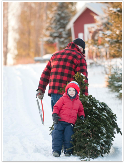 St Croix Valley Trees Last 2 Weekend Of October Tag Your Tree Not Many Blue Spruces Any Longer Does H Christmas Tree Farm Tree Farms Country Christmas