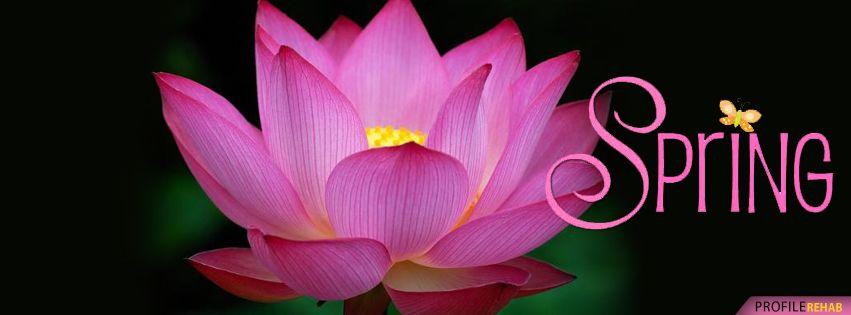 Beautiful Spring Lotus Flower Facebook Cover Lotus Flower Pictures