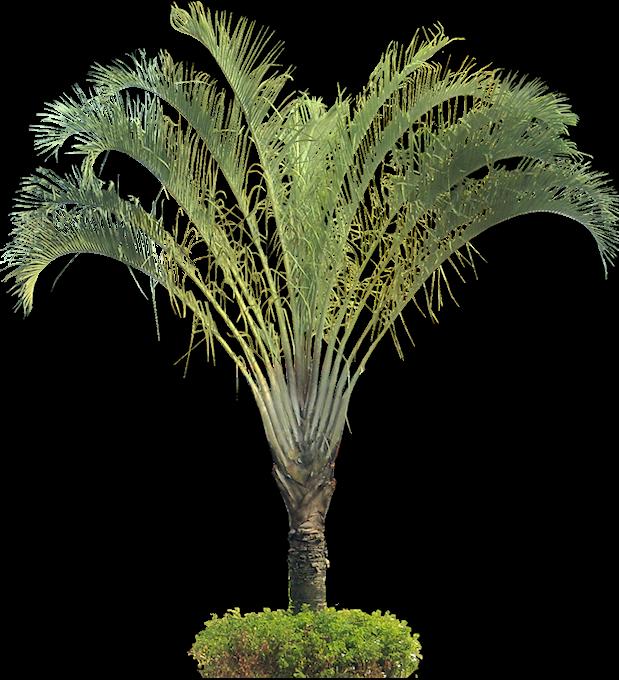 Tropical Plants Palm | www.pixshark.com - Images Galleries ...
