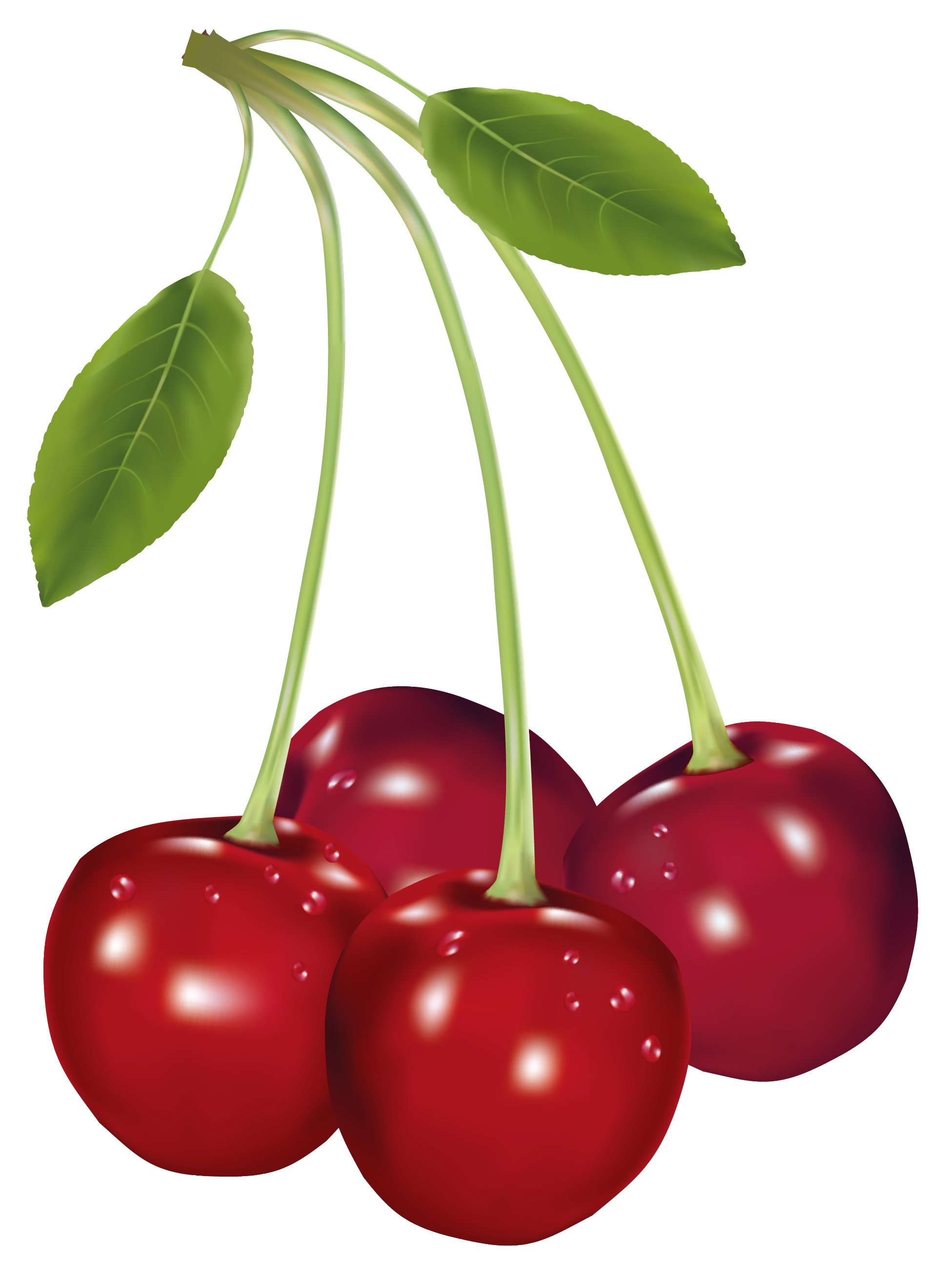 cherries png clipart picture gallery yopriceville high quality rh pinterest com clipart cherry tree clipart cherry pie