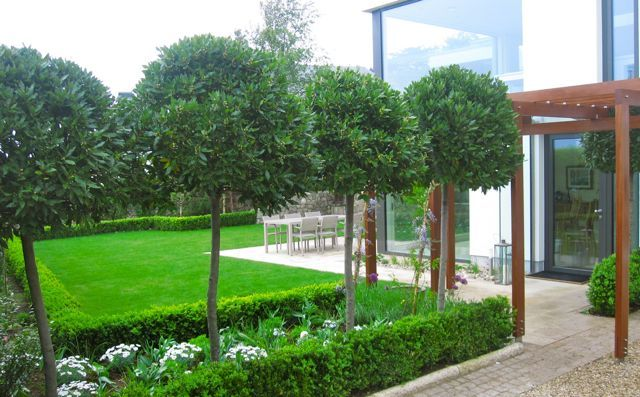 Standard Bay Trees Front Gardens Garden Design Bay Tree