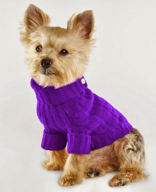 süße lustige Bilder kleine Hunde Pullover | alles für Hund und Katz ...