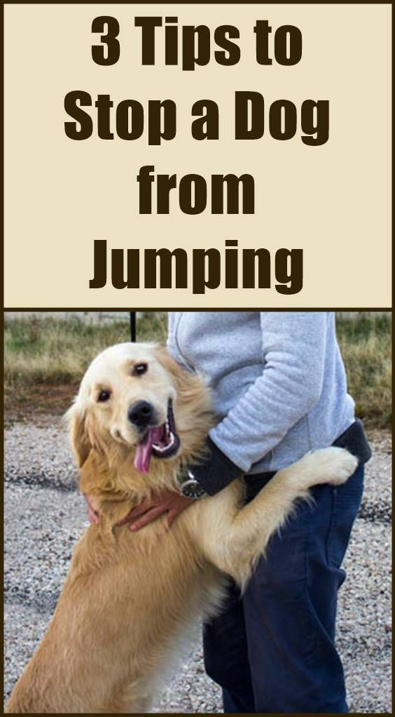 You Cannot Just Tell A Dog To Stop Jumping On People You Have To