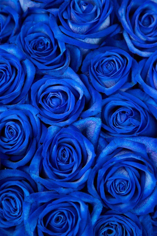 Epingle Par Carmina Salazar Sur Blue And White Roses En 2020 Fond D Ecran Fleur Rose Photo Noir Et Blanc Paysage Fond D Ecran Colore