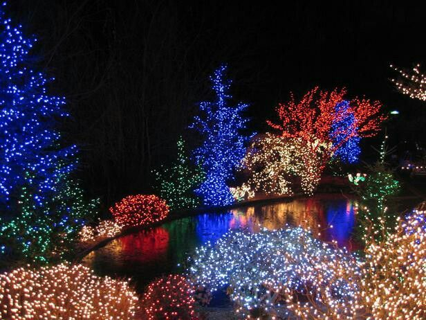 Multi colored tree lights for christmas next christmas Pinterest