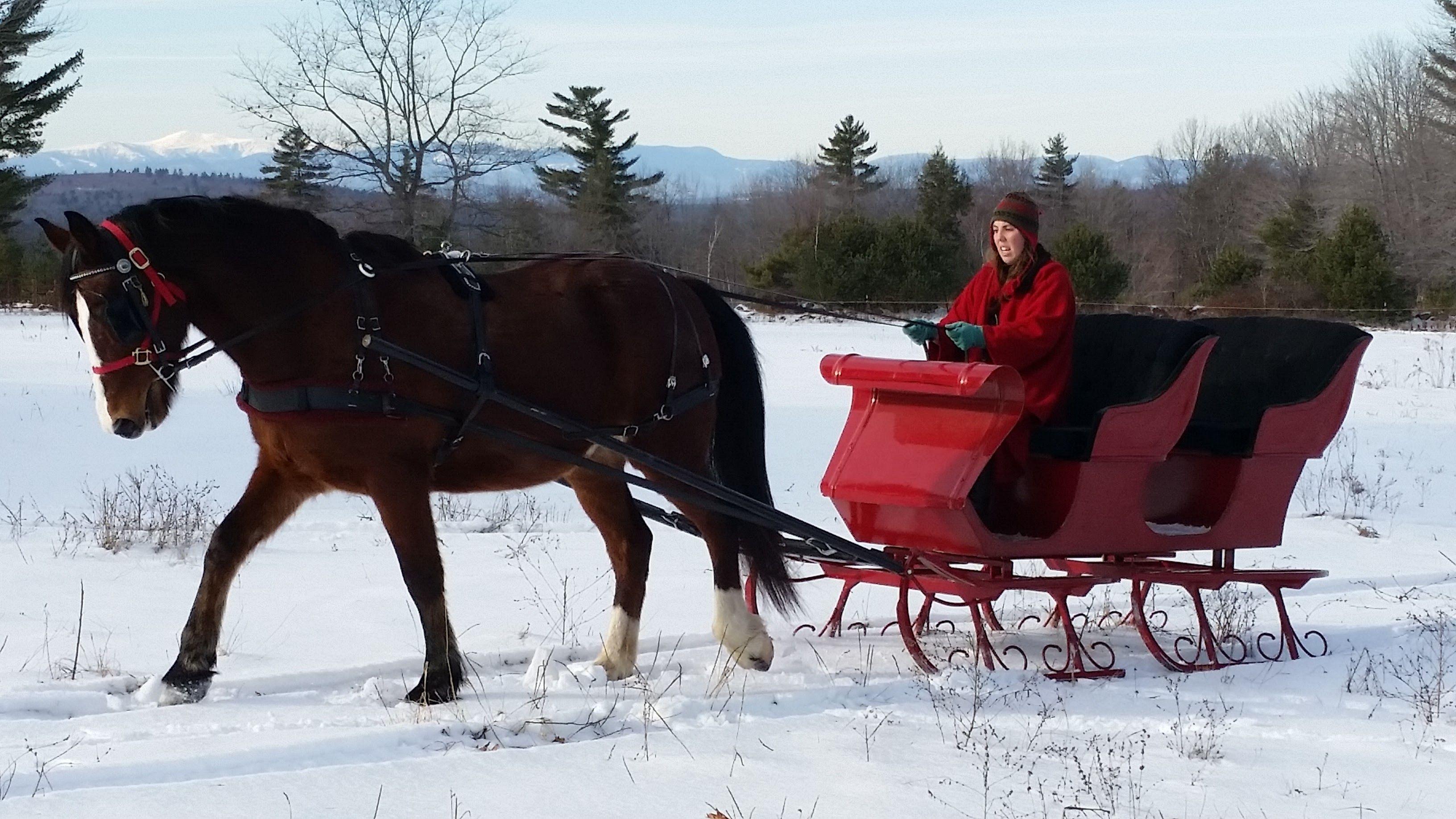 Carousel horse farm best horseback riding in maine