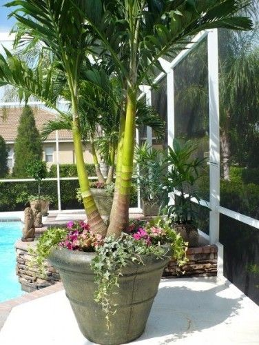 Nice Potted Plants With Natural Palm Tropical Landscaping Plants Around Pool Potted Plants Outdoor