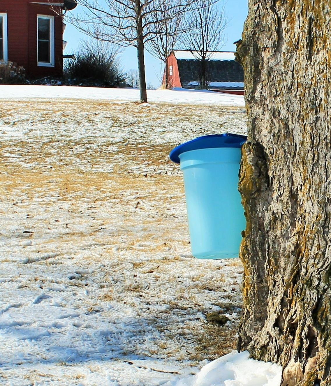 how does the bucket and spile combo work trees home and gifts