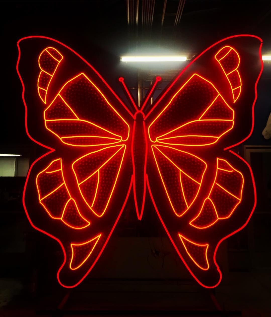 Butterfly's are graceful, varied and enchanting, small but