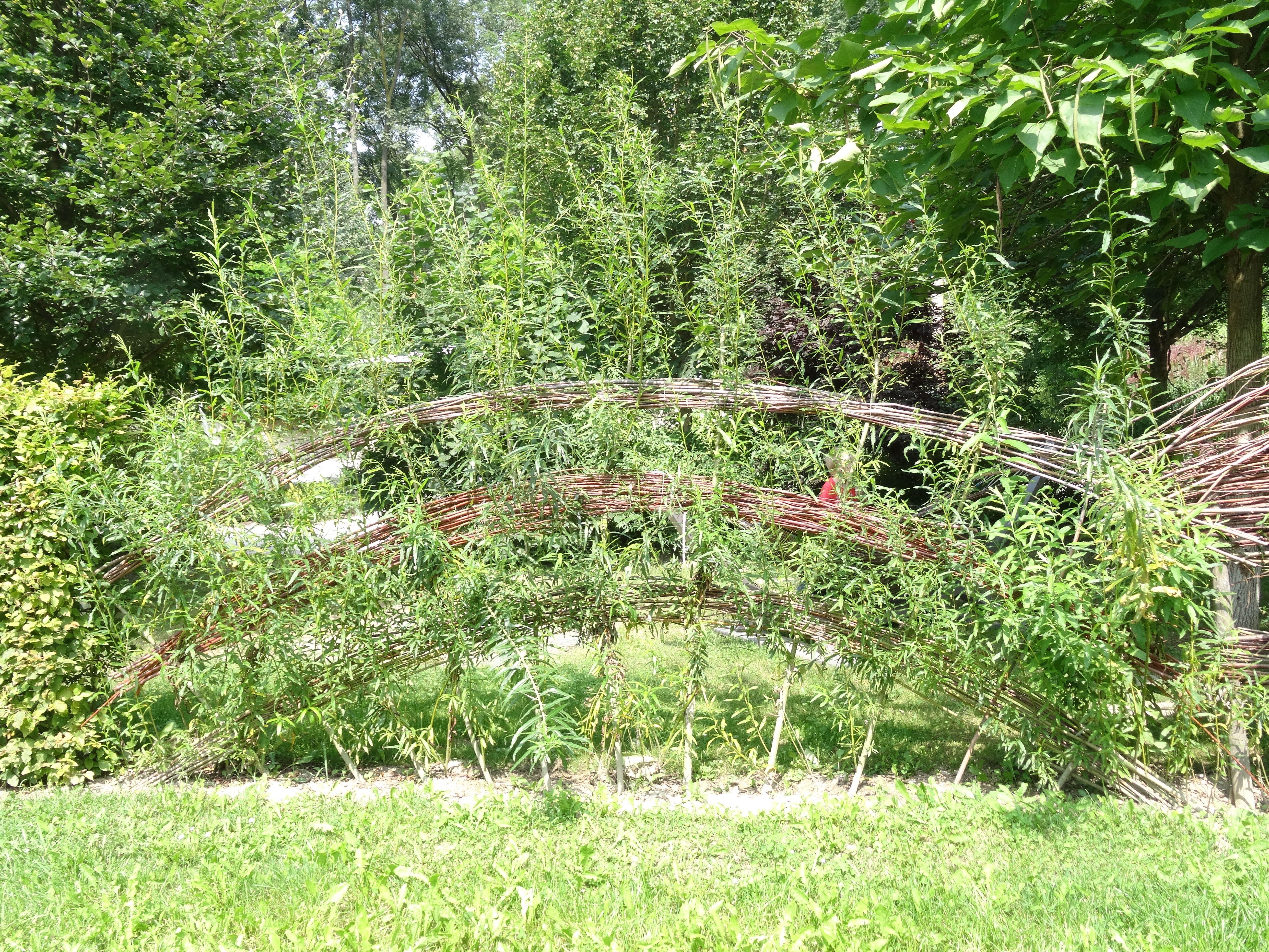 Garten Tulln Sichtschutz Weide Garten Pinterest