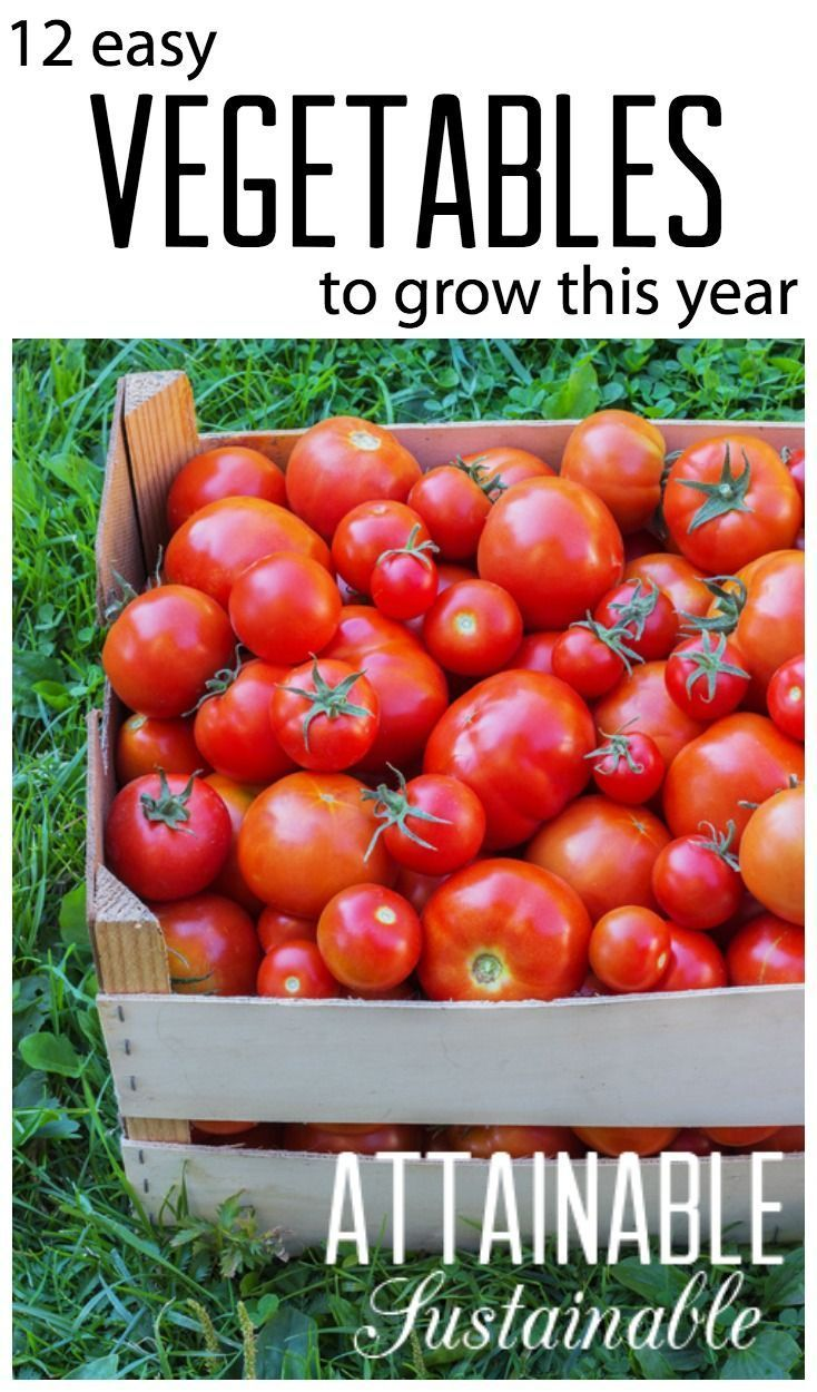 Easy Vegetables To Grow For A Successful Garden Harvest 400 x 300