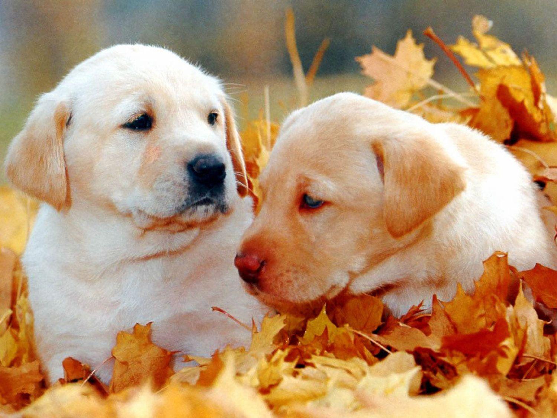 Download Wallpaper Halloween Puppy - 663d9e6f52dbde30ab58fd69b730b1a2  Snapshot_217844.jpg