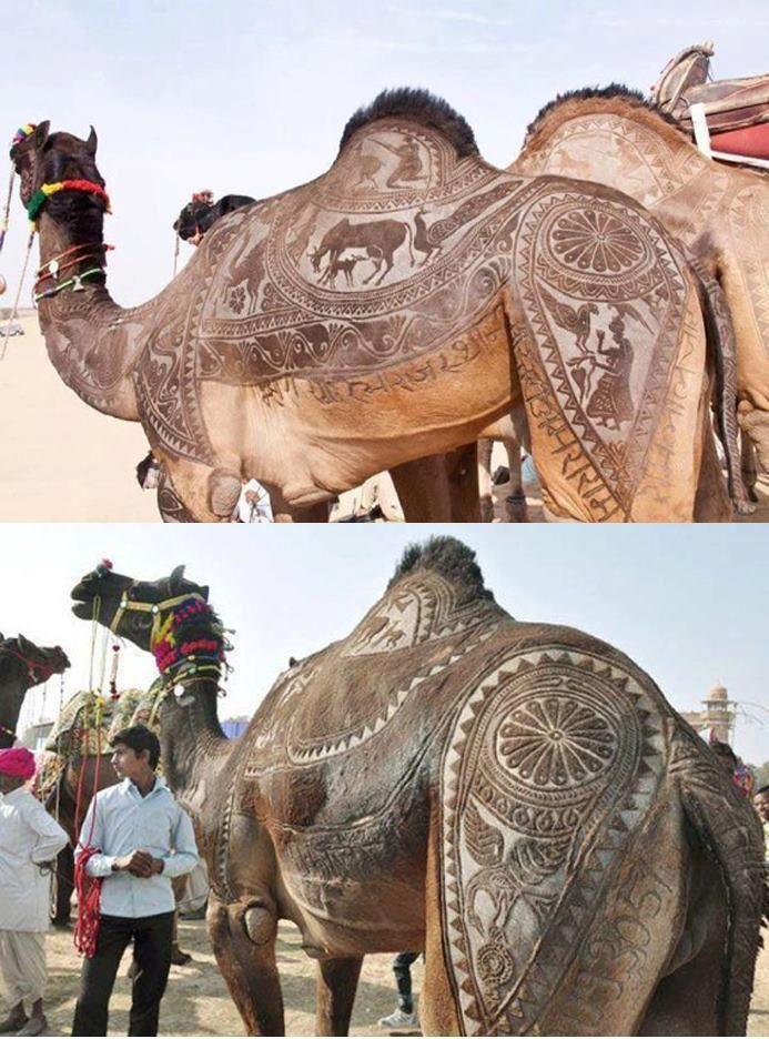 camel hair craft