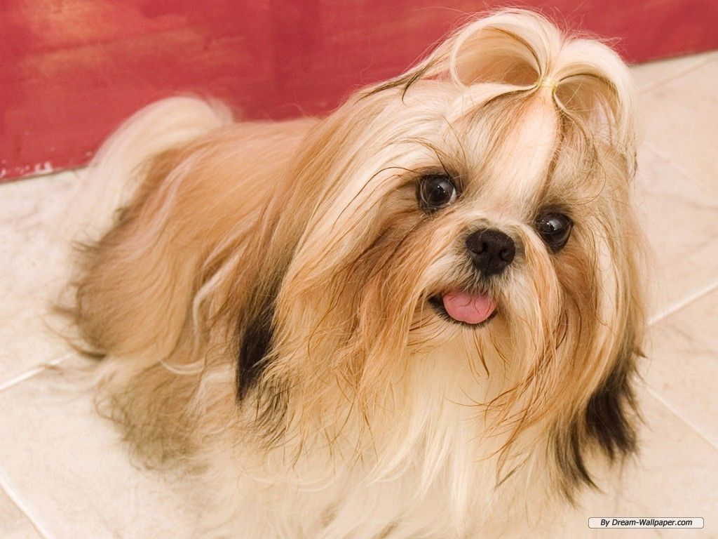 cute dog wallpapers android apps on google play wallpapers