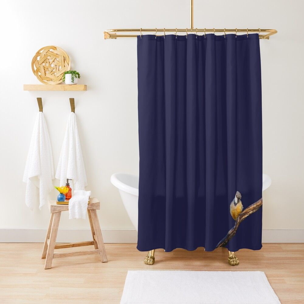 A Roufous Whistler Cocking Its Head On Navy Blue | Shower ...