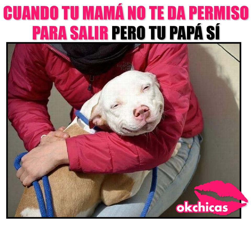 20 Divertidos Memes De Perros Que Te Haran Llorar De Risa Caras De Perros Divertidas Memes Perros Humor Divertido Sobre Animales