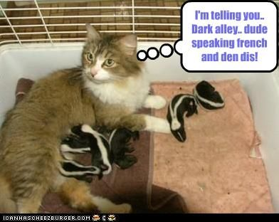 I M Telling You Dark Alley Dude Speaking French And Den Dis Baby Skunks Crazy Cats Funny Animals