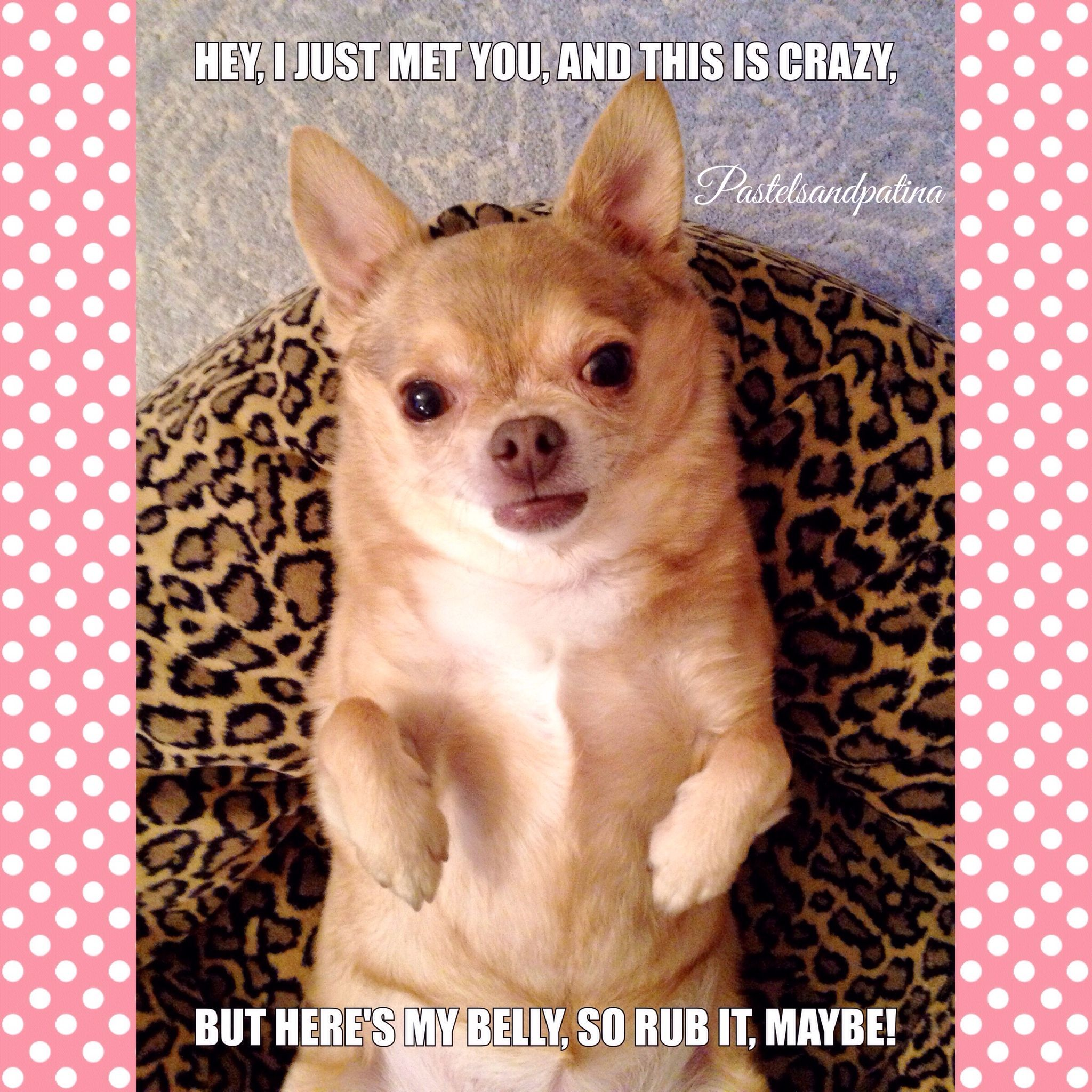 Pin by Betsy Smith on Funnies Chihuahua, Doggy, Animals