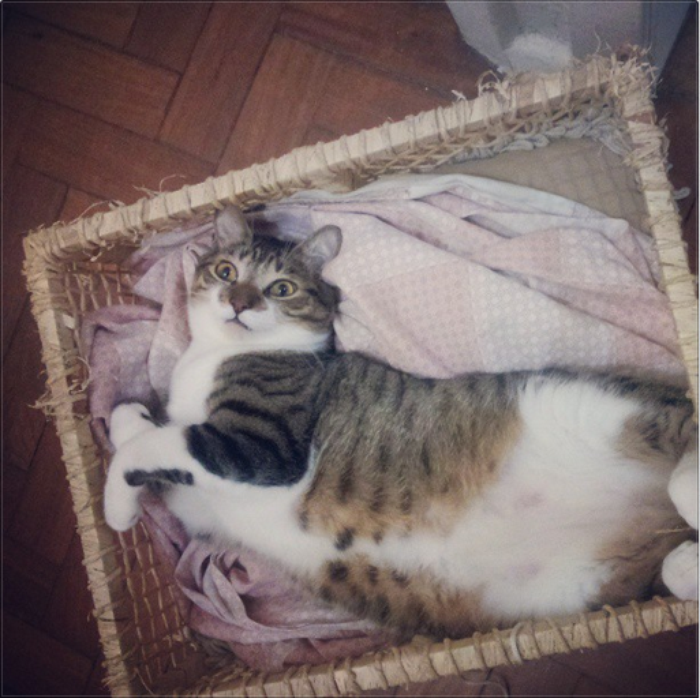 A friend's cat being cute. By _Ilaana33