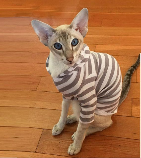 Sphynx Cat Clothes Hoodie Grey And White Striped Resort Wear Cat