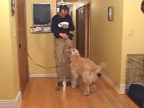 Train A Dog Not To Jump On Guests Youtube Dog Training Dogs